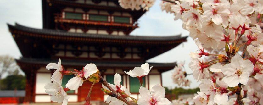 japan-nature-sakura